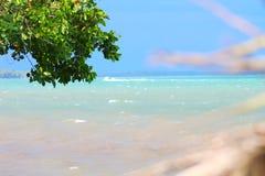 paysage tropical Photo libre de droits