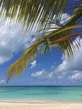 Paysage tropical Photographie stock