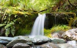Paysage tropical dans la forêt tropicale Photos stock
