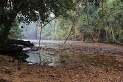 Paysage tropical de forêt tropicale, Taman Negara Pahang Malaisie photo stock