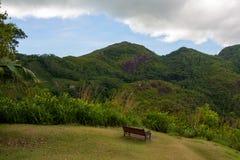 Paysage tropical luxuriant de jungle, vue avec le banc Images stock