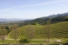 Paysage typique avec des rangées des raisins dans la région viticole de Napa Valley photographie stock