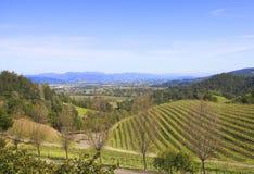Paysage typique avec des rangées des raisins dans la région viticole de Napa Valley photo libre de droits