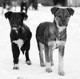 Paysage urbain d'hiver avec deux chiens Photo stock