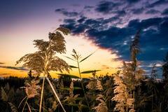 Paysage urbain - delta Vacaresti Photo stock