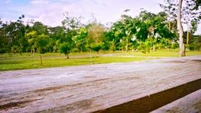 Paysage vert avec du bois léger Photographie stock libre de droits