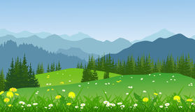 Paysage vert d'été avec des montagnes, des marguerites et des arbres Illustration Stock