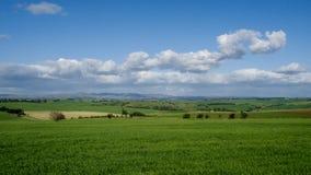 Paysage vert de terres cultivables d'Australie Photographie stock