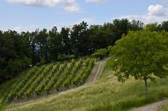 Paysage vert de vignoble en Italie Photographie stock