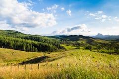 Paysage vert du Nouvelle-Zélande d'été Photographie stock libre de droits