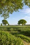 Paysage vert du Sussex image libre de droits