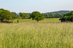 Paysage vert du Sussex photographie stock