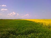 Paysage vert et jaune images libres de droits