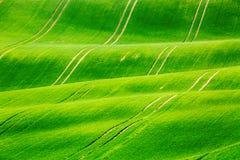 Paysage vert naturel de ressort de Minimalistic avec des champs d'herbe verte Collines vertes de roulement avec le champ du blé S images libres de droits