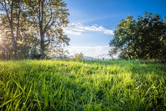 paysage vert scénique merveilleux avec le pré et les arbres en ciel bleu, changement des saisons, dernières nuances d'été en nove Images libres de droits