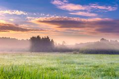 Paysage vibrant avec le pré brumeux en Pologne images libres de droits