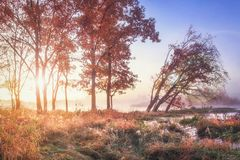 Paysage vibrant d'automne de paysage sur le rivage de rivière avec les rayons de soleil vifs par des arbres Automne Nature coloré photo stock