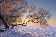 Paysage vibrant d'hiver au lever de soleil de matin avec la lumière du soleil jaune Arbres de Milou dessus congelés sur le rivage images stock