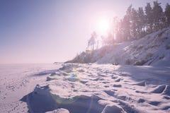 Paysage vif d'hiver dans la tonalité rose avec la fusée de lentille photos stock