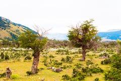 Paysage, vue des arbres secs dans la perspective des montagnes, Patagonia, Chili Copiez l'espace pour le texte photos libres de droits