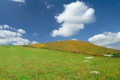 Paysage, vue des champs verts de roulement photographie stock libre de droits
