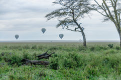 Paysages africains - parc national Tanzanie de Serengeti Photo stock