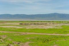 Paysages africains - région de conservation de Ngorongoro, image stock