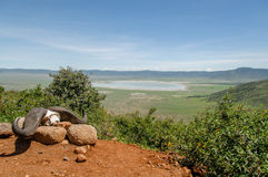 Paysages africains - région Tanzanie de conservation de Ngorongoro Photo libre de droits