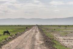 Paysages avec la route photographie stock