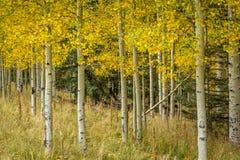 Paysages d'arbre de chute Images stock