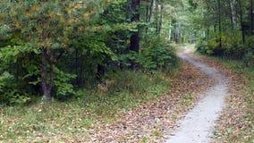 Paysages d'automne Photo libre de droits