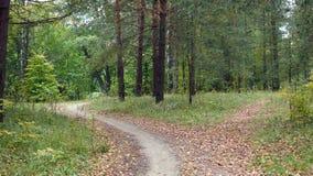 Paysages d'automne Image libre de droits