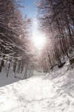 Paysages d'hiver Image stock