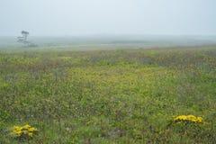 Paysages de l'île de Nantucket, Etats-Unis Photo stock