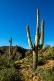Paysages de lac apache en Arizona images stock