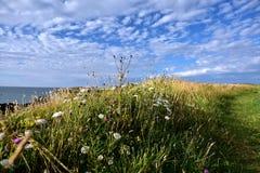 Paysages de nature Images libres de droits