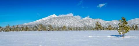 Paysages de neige d'hiver de l'Arizona photographie stock
