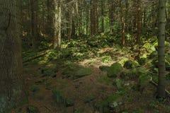 Paysages, montagne, sommet, pierres, mousses, mousse, étonnant, arbres photo stock