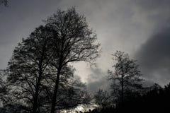 Paysages sombres avec les arbres foncés photographiés un après-midi orageux sombre d'hiver en Allemagne images libres de droits