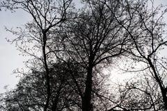 Paysages sombres avec les arbres foncés photographiés un après-midi orageux sombre d'hiver en Allemagne images stock