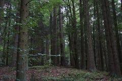 Paysages sombres avec les arbres foncés photographiés un après-midi orageux sombre d'hiver en Allemagne photographie stock