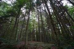 Paysages sombres avec les arbres foncés photographiés un après-midi orageux sombre d'hiver en Allemagne photos stock