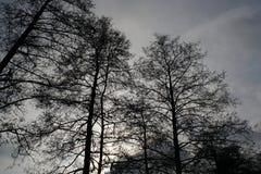 Paysages sombres avec les arbres foncés photographiés un après-midi orageux sombre d'hiver en Allemagne photo libre de droits