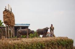 Paysan de Gorkhas dans des vêtements nationaux avec le buffle Image libre de droits