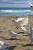 Paz Fotografia de Stock Royalty Free