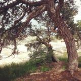 Paz debajo del árbol Fotos de archivo libres de regalías