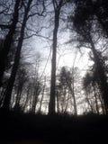 Paz del árbol Fotos de archivo