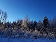 Paz del campo del país de las maravillas del invierno hermosa fotografía de archivo libre de regalías