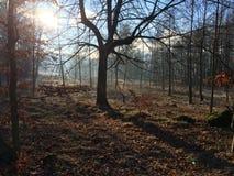 Paz del otoño del bosque fotos de archivo
