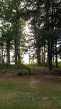 Paz del verano Imagen de archivo